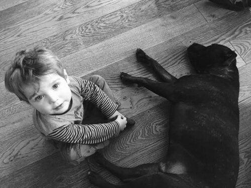 Recém-nascidos e animais de estimação