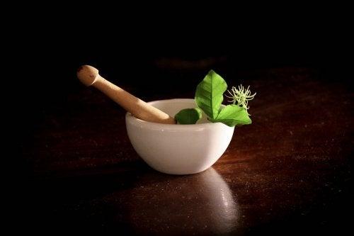 11 plantas medicinais para as grávidas