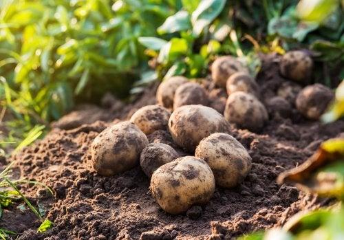 É necessário substituir as batatas pro outros alimentos na gravidez