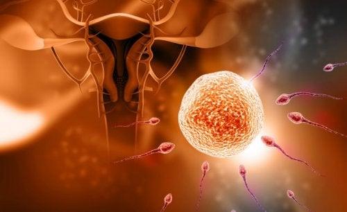 5 mitos sobre a fecundação