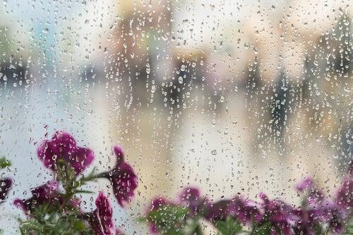 O som da chuva é um ruído branco