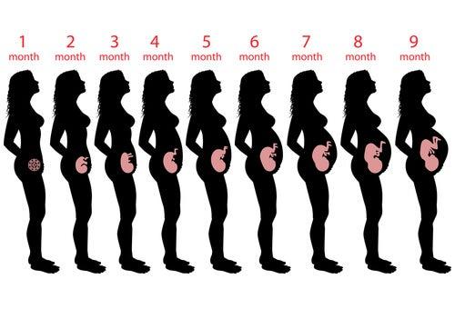 Nona semana de gravidez