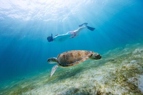 O mergulho para crianças é um esporte altamente recomendado.