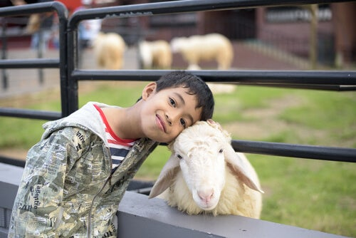 as crianças adoram os animais