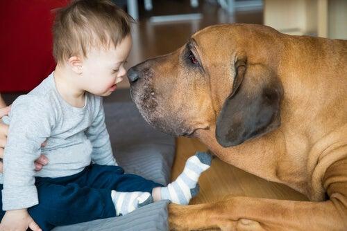 Como os animais de terapia podem ajudar as crianças?