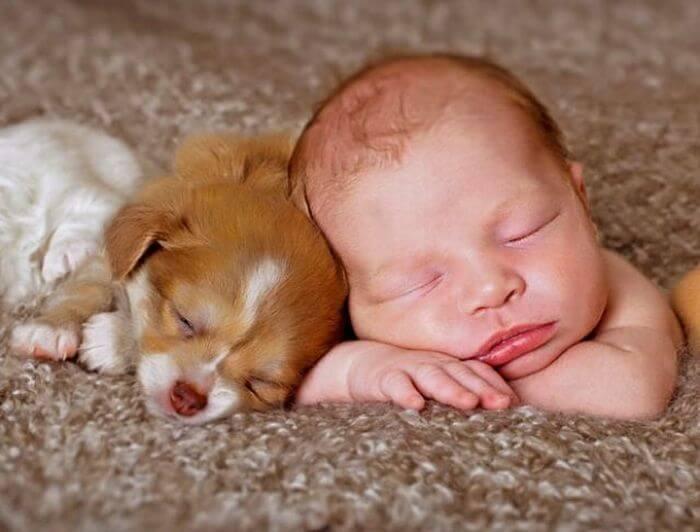 convivência entre recém-nascidos e animais