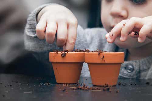 Como cultivar uma planta a partir das sementes em casa?