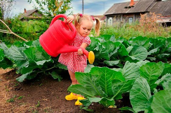 Plante essa semente e seu filho terá o que cultivar por toda a vida