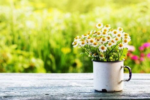 a primavera altera os hormônios