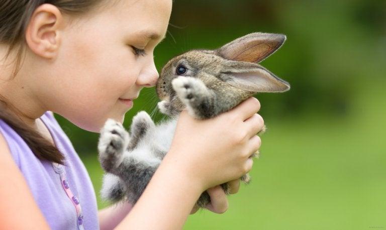 Os coelhos são um dos melhores animais de estimação