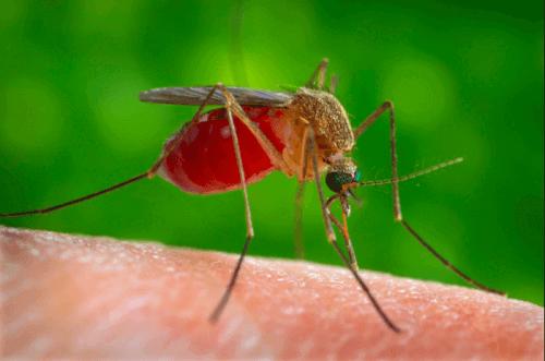picadas de insetos