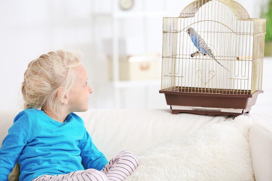 Vantagens para as crianças de ter contato com animais