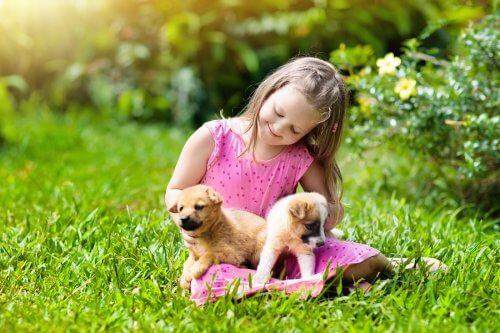 menina brinca com filhotes de cães