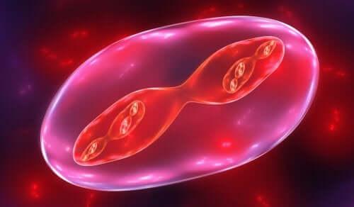 Como explicar as fases da meiose para as crianças