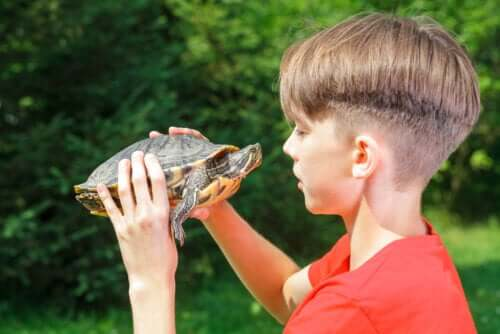 Os efeitos da técnica da tartaruga na autoestima
