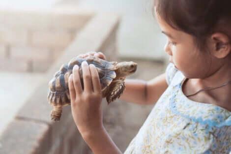 Menina olhando uma tartaruga para entender a técnica da tartaruga