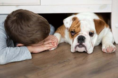 Mordidas de cachorro: saiba o que fazer