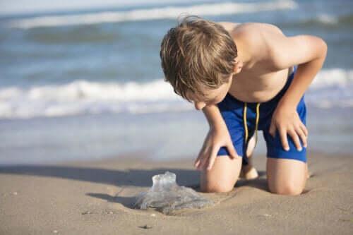 Ferimentos por água-viva em crianças