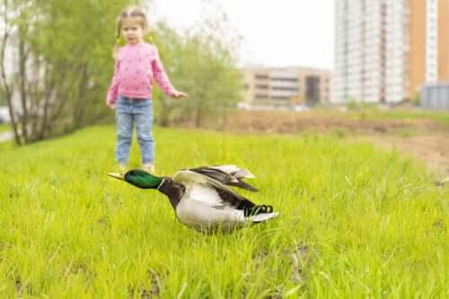 Meu filho tem medo de pássaros: o que fazer?