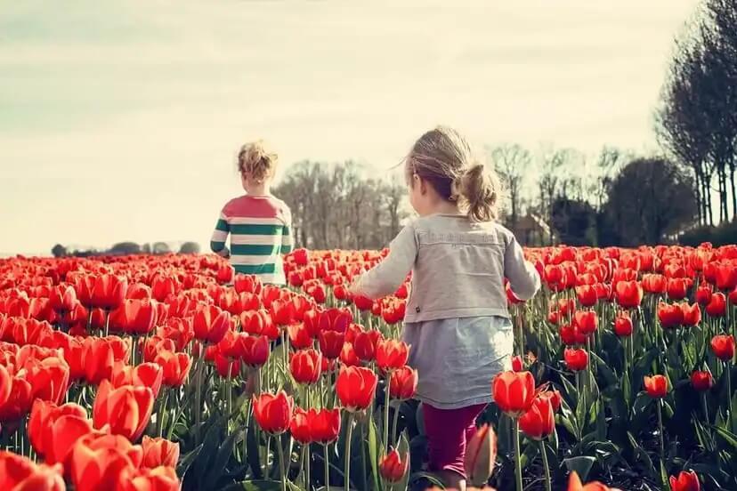 Duas crianças em um campo de rosas.