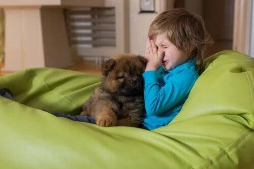 5 recomendações para crianças com alergia a animais